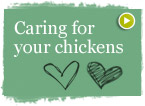 Caring for your Chickens